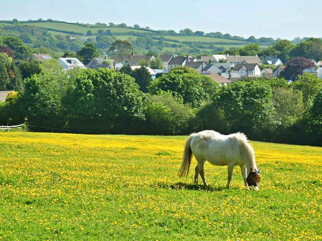 horse, cornwall