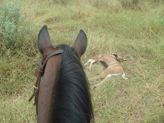 Botswana, ratsastusmatka, riitta reissaa, horsexplore, ratsastussfari
