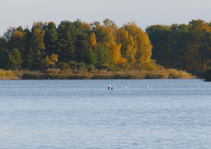 Stawy Milickie - Staw Niezgoda jesienią