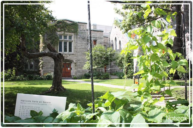 Jardin potager de l'église anglicane St-James Apôtre Montréal