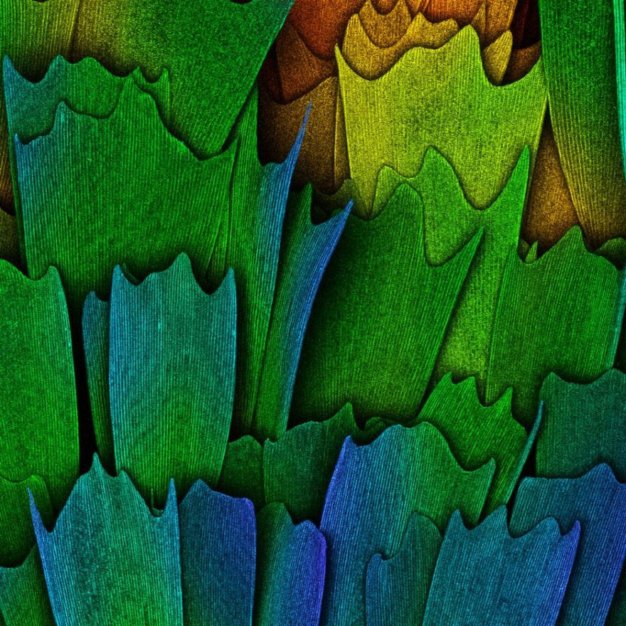 2016 Nikon Macro Photo Contest Winners Show The World Like You've Never Seen Before - Scales Of A Butterfly Wing