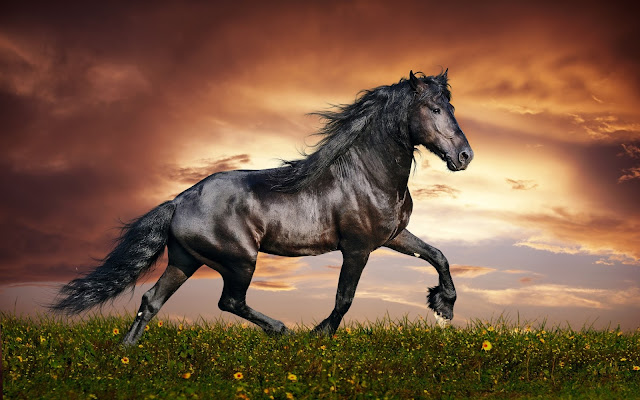 High Quality (HQ) Black Horse Wallpapers and Photos