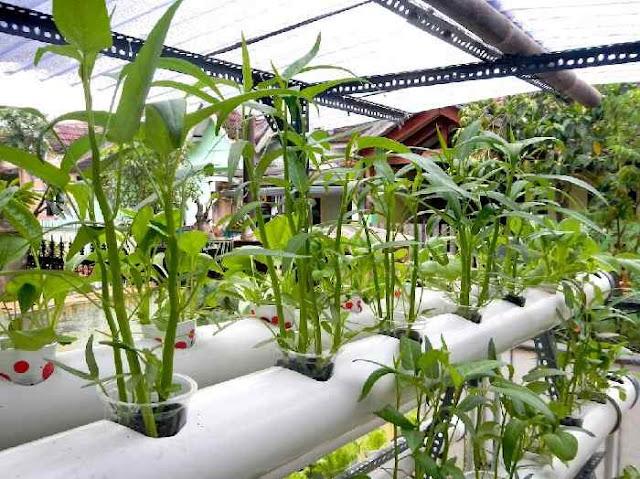 contoh bisnis pertanian modal kecil yang menguntungkan