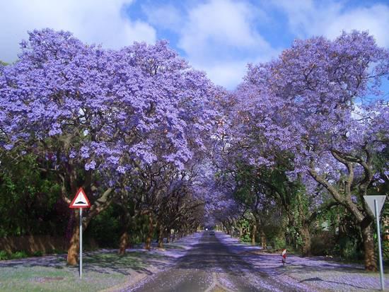 http://2.bp.blogspot.com/-JWgtU0hKZFU/ULniqtsq7DI/AAAAAAAA6bY/8IXeK9XGSSE/s1600/Top-10-Tree-Tunnel-009.jpg