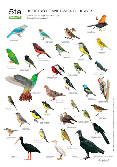 Avistamientos de Aves en Silvana Cundinamarca  Colombia