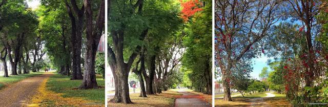 áreas verdes de Brasília