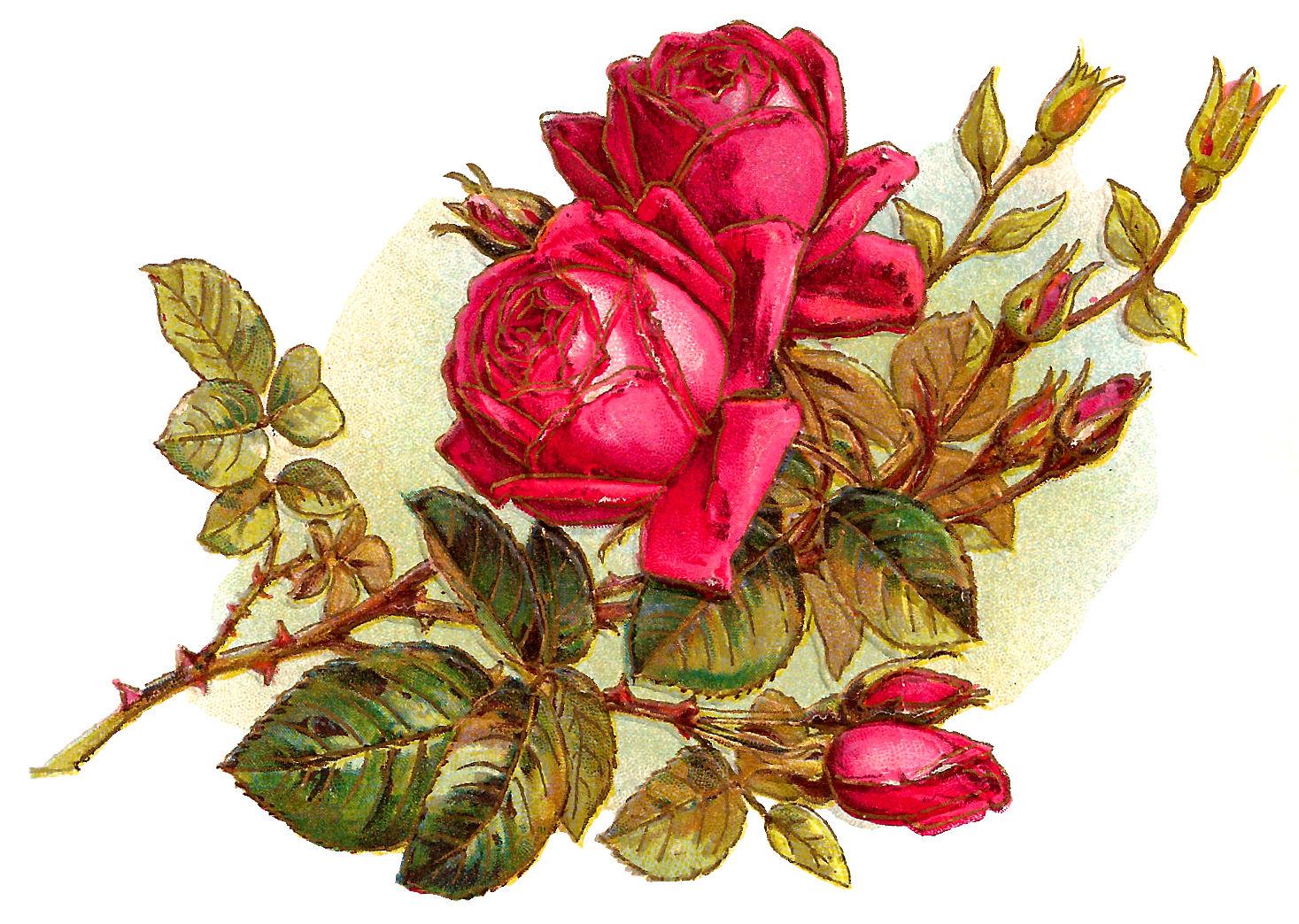 rose flowers digital design - photo #21