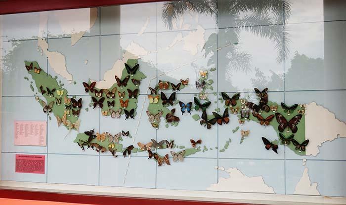 Peta Sebaran Kupu-kupu di Sanggaluri
