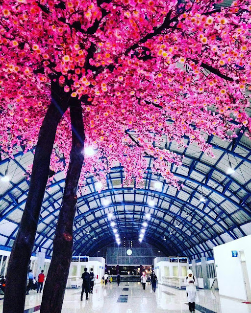 sakura di stasiun palmerah