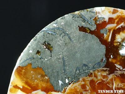 黄鉄鉱化-デスモセラスdesmoceras sp.白亜紀Majunga, Madagascar