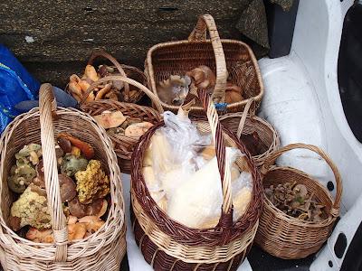grzyby 2017, grzyby na Orawie, grzyby w październiku, wilgotnice, rydze, podgrzybki, piestrzenica infułowata, zbiory grzybowe 2017, jesień na Orawie
