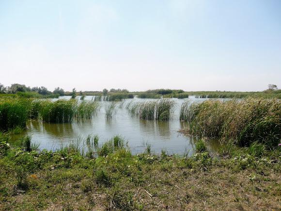 Річка Вовча. Притока Самари