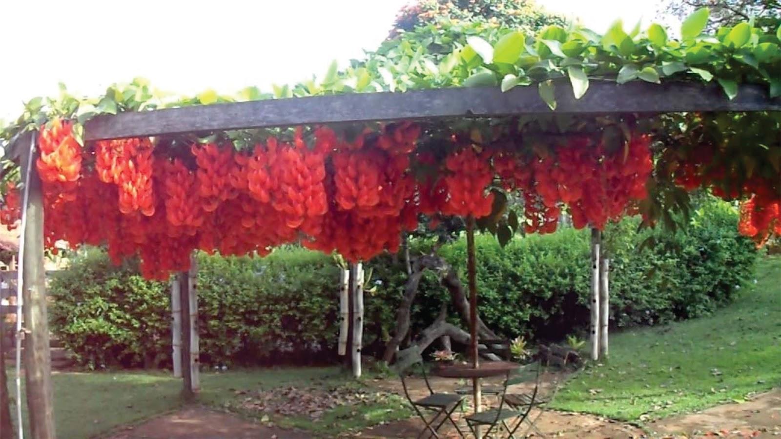 Plantas para decorar tu prgola de Madera PACKHOGAR
