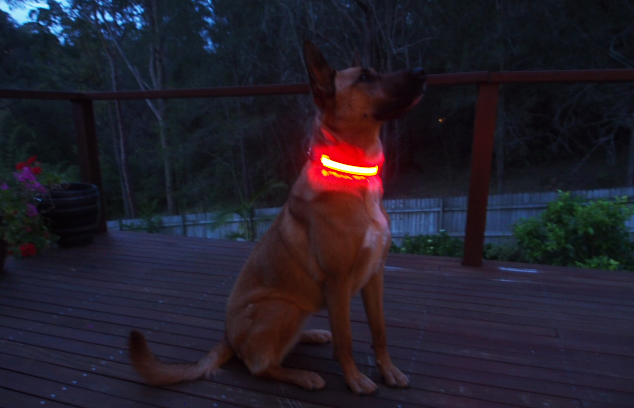 ION™ Dogs - LED Dog Collar Review | Australian Dog Lover