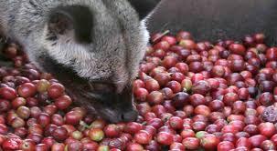 Berbagai Kopi Sumatra yang diminati kalangan pecinta kopi