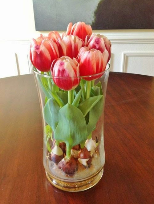 Faire fleurir des bulbes de tulipes en vase au 303 home deco for Bulbe