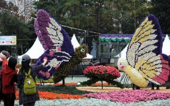 Menikmati Semarak Festival Bunga Tomohon yang Mendunia