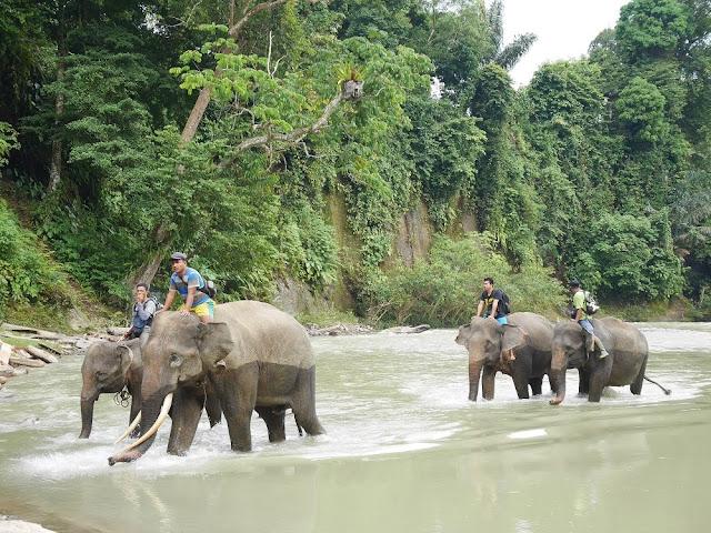 Saat gajah datang dari hutan menuju lokasi mandinya setiap hari