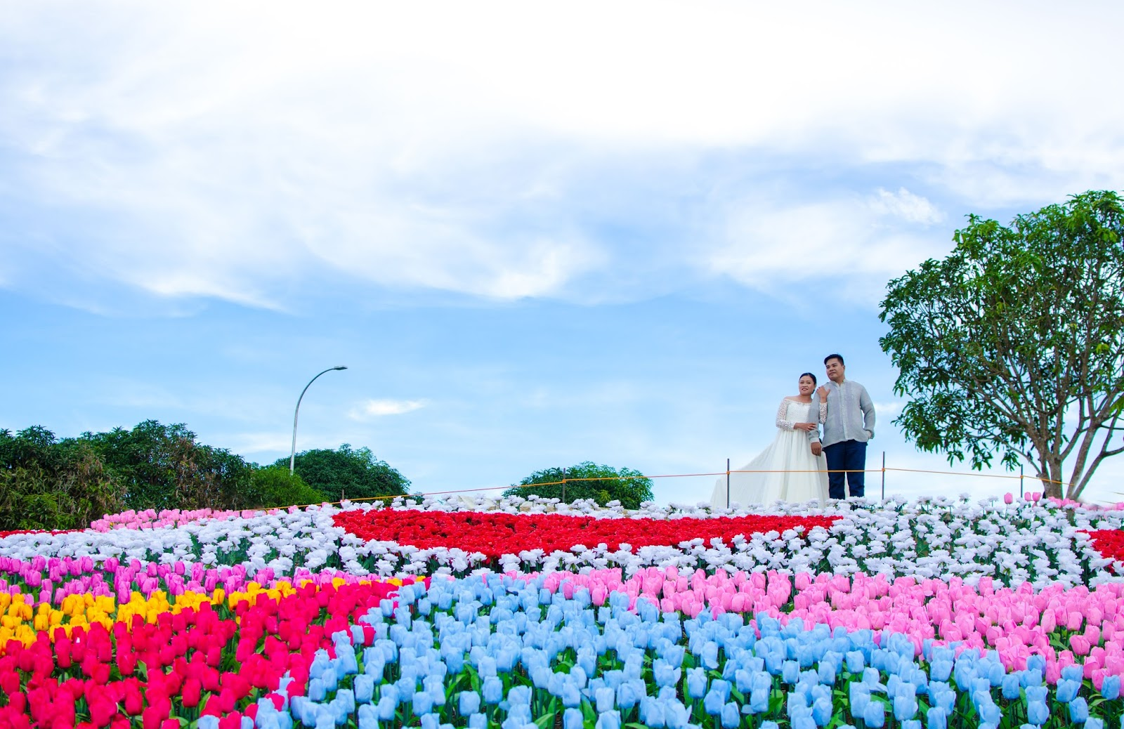 No borders 20 000 led roses and tulips grow in bohol town for Jardin necitas