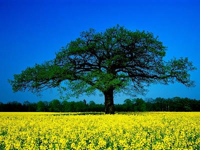 Alam ini sungguh indah dan unik bentuknya
