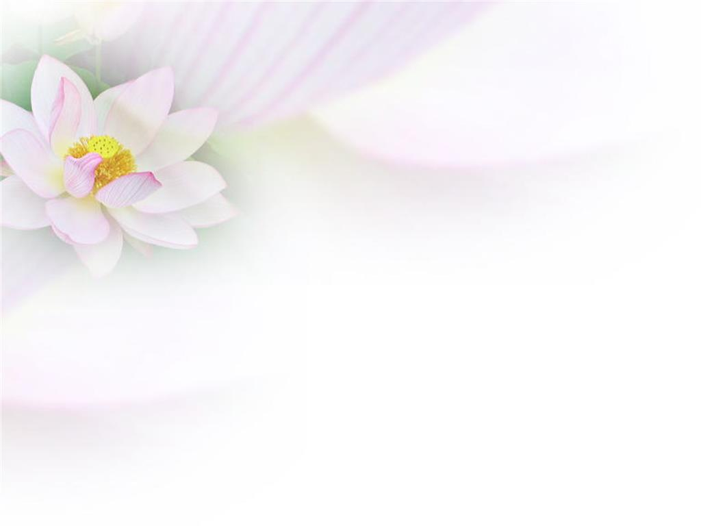 Blooming lotus background picture