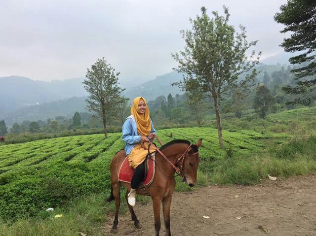 wisata agro gunung mas