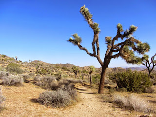 On trail in Black Rock Canyon, Joshua Tree National Park