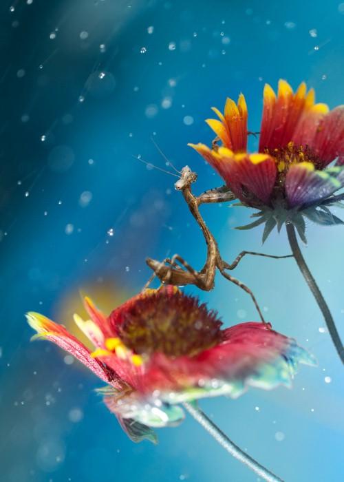 Необычные фотографии насекомых 18