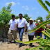 Canalizan recursos para cultivadores de pitahaya y cítricos