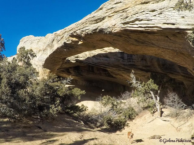 Hiking to Moonshine Arch, Vernal, Utah, Hiking in Utah with Dogs