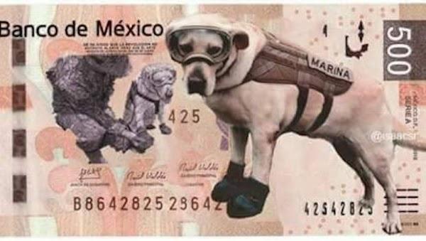 Conmueve en redes sociales labor de perros rescatistas