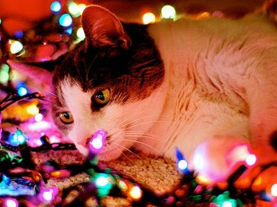 Funny Cute Cats Wallpapers Oh By The Way Kitties Of Christmas 2011
