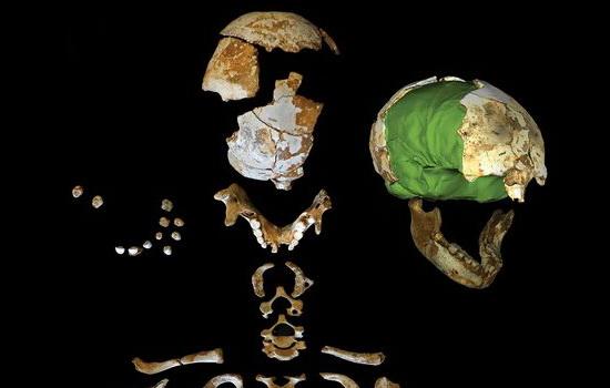 Laporan Penelitian Otak Homo neanderthalensis tumbuh terlambat