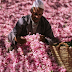 Rose Festival in Morocco 2018: May 10th to 13th