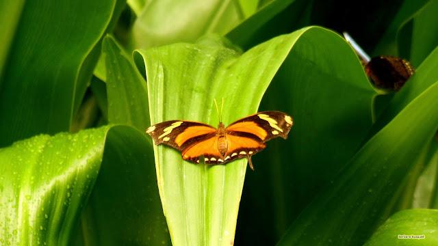 Wallpaper met een oranje vlinder op het blad van een groene plant.