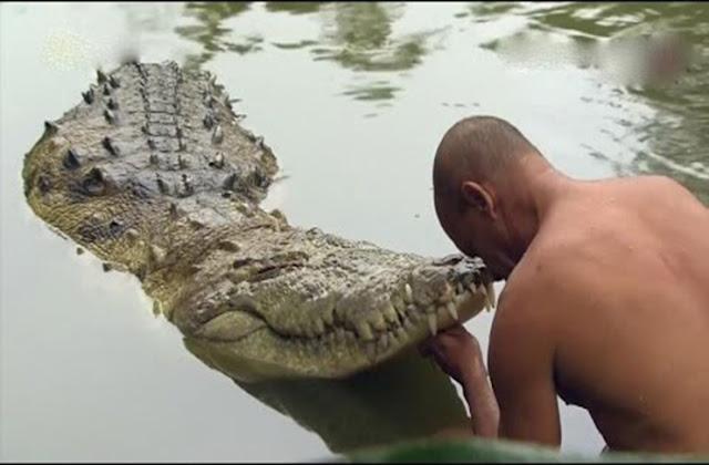 Vegetarian crocodile babiya