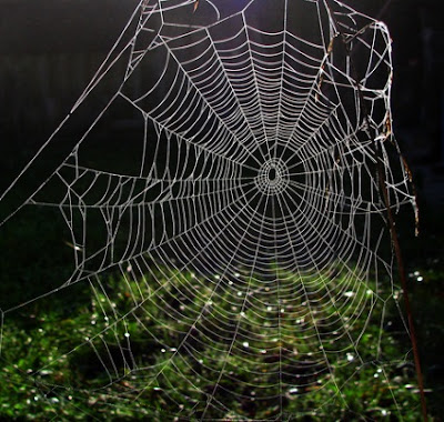 If people can get over their creep factor, they can learn that the orb spider web is amazingly well designed.