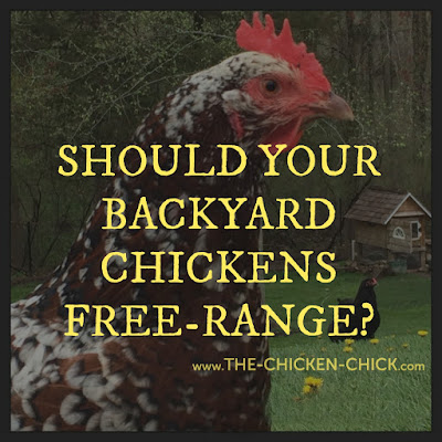 Chickens, predators & the myth of supervised free-range.