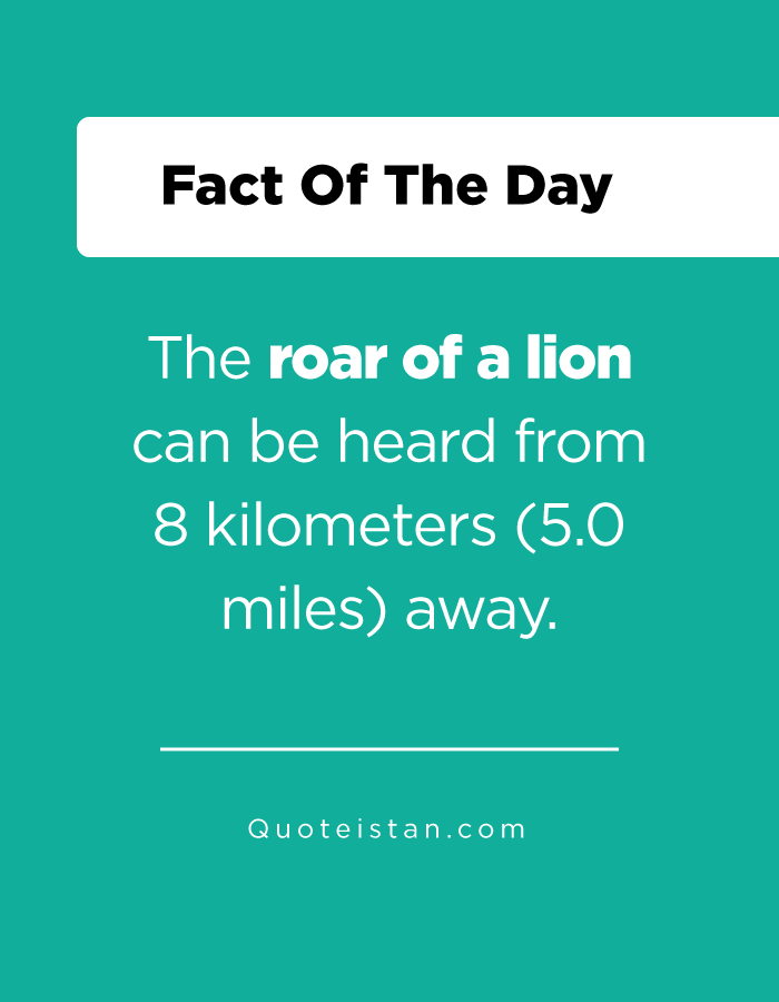 The roar of a lion can be heard from 8 kilometers (5.0 miles) away.