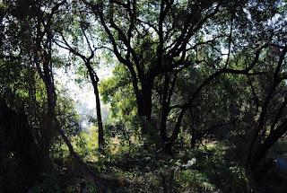 les abords immédiats des cataractes abritent une belle forêt dense …