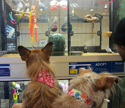 Jada and Bailey with Budgies at PetSmart