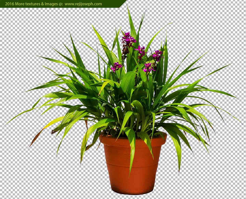 PNG Garden Plant Texture 00070