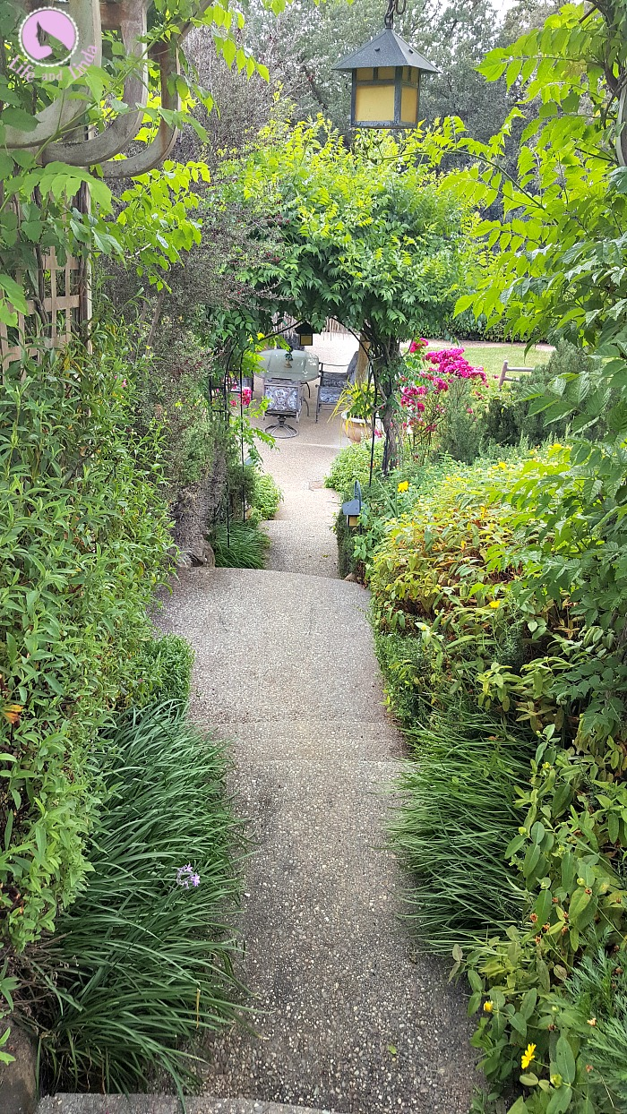 Lush landscaping surrounding the steps to out pool.