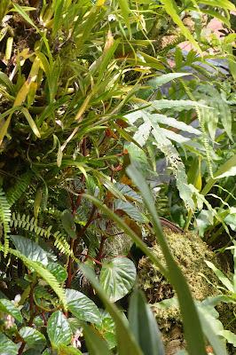 Norvège Oslo : parc botanique serre de plantes tropicales