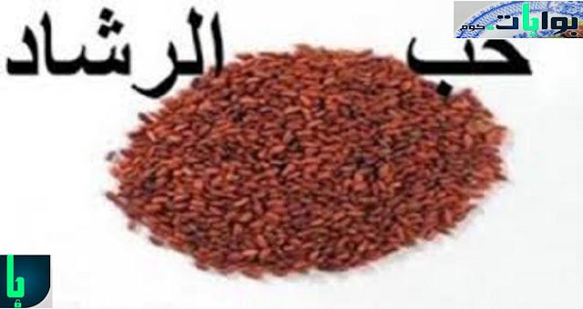 حب الرشاد للبشرة الدهنية والحبوب