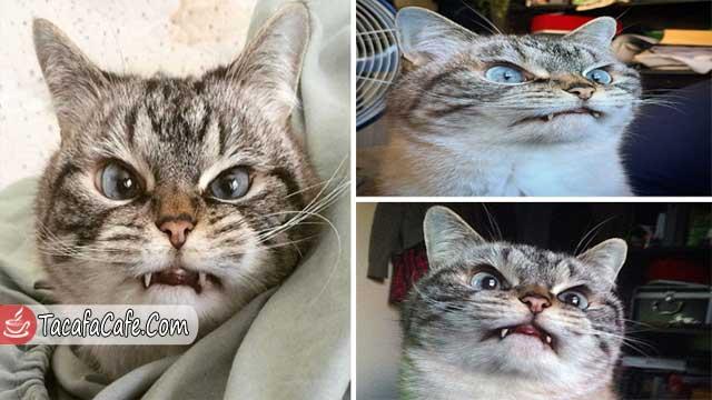 """بالصور.. تعرف على """"لوكي"""" قط  يشبه مصاصي الدماء!"""