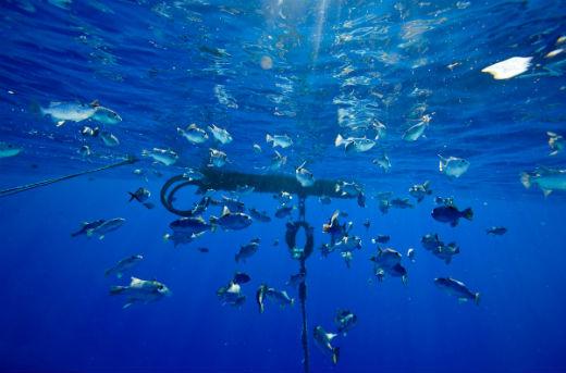 rumpon alat bantu penangkapan ikan