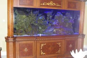 Giant Aquariums: 900 gallon custom reef aquarium   $43000 (Fort