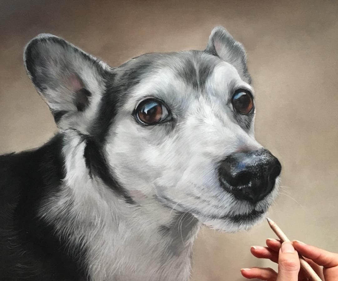09-Dingo-Patricia-Otero-Cats-and-Dogs-Portrait-Artist-www-designstack-co