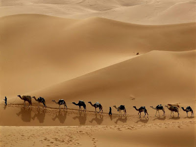 Beautiful Desert Normal Resolution HD Wallpaper 4